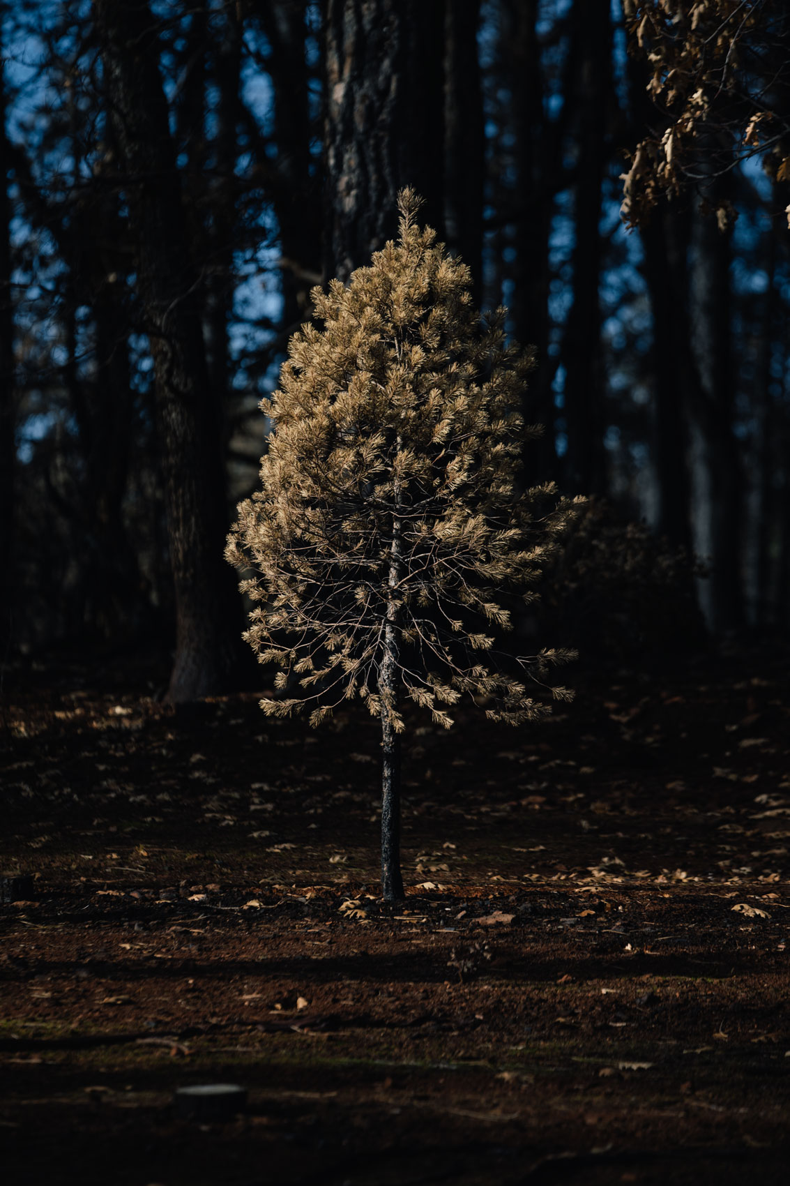 Mason Trinca | Last Christmas Tree Farm
